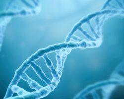 Genetische oorzaak RP17 gevonden!